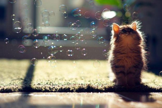 what_a_funny_little_kitten_640_16
